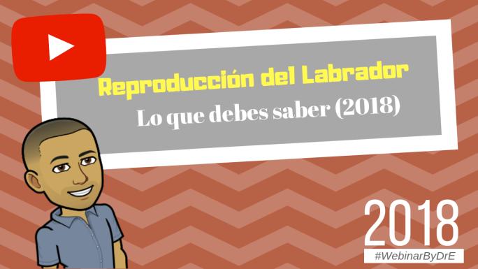 labrador spanish